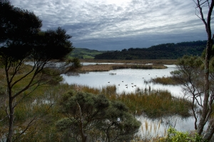Bethel's wetland