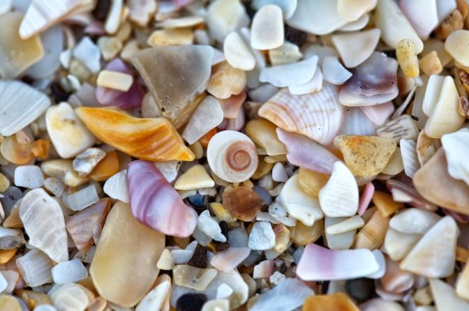 sand detail of fragmented shells