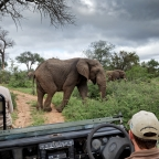 Kruger & Klaserie Safari