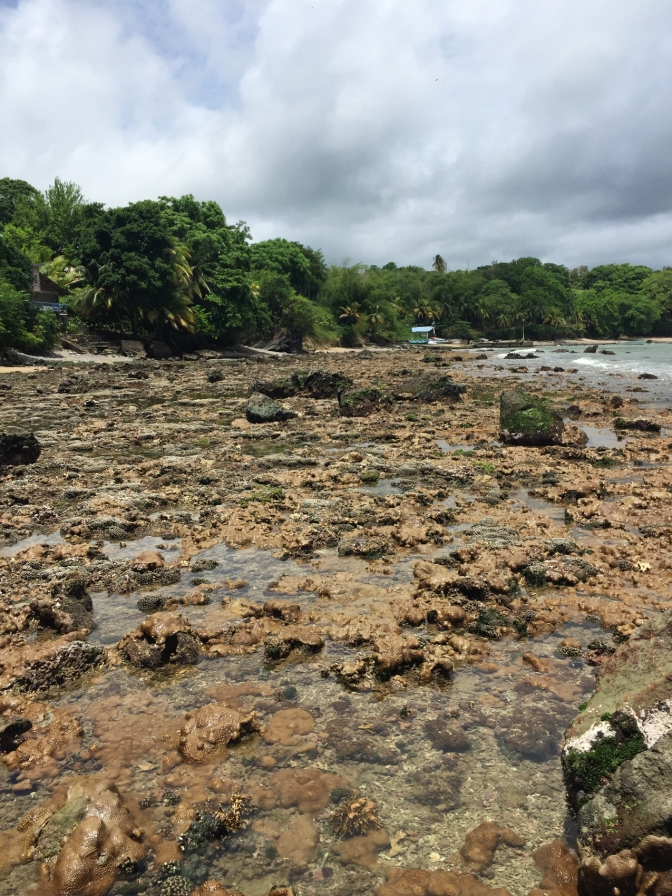 Low tide showing corals at Grande Anse Bay